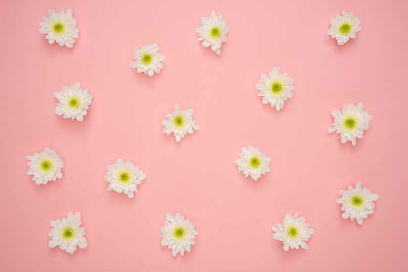 white and yellow flower on pink wall